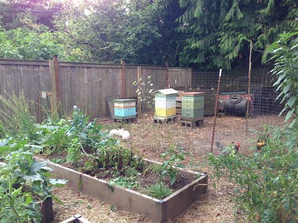 KikiMasthem_backyard-farm