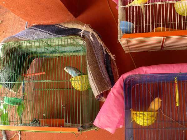 birds-birdcages-color