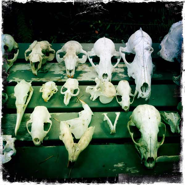 JaqHurlbert_skulls