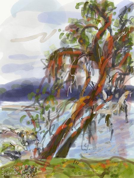 arbutus tree west coast landscape painting, digital plein air painting